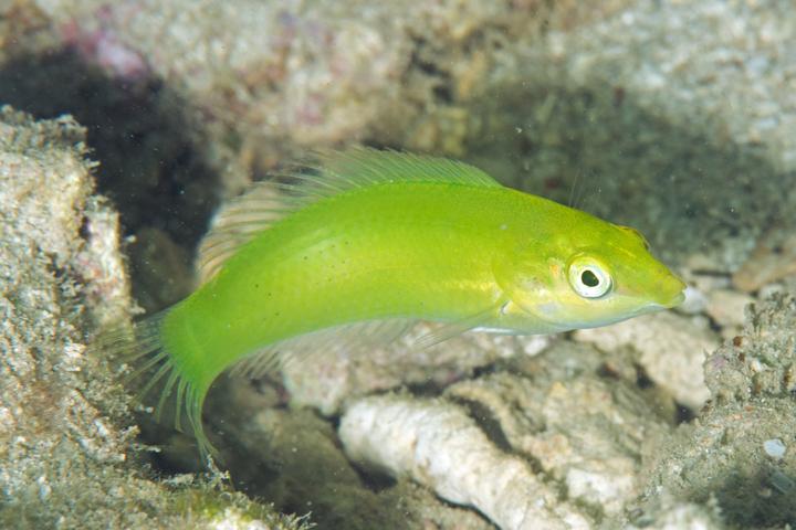 【南国のグリーン】緑色の海水魚ランキングBEST3新着情報