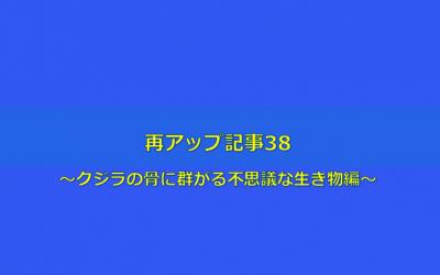 【クジラの骨に群がる不思議な生物編】再アップ記事38