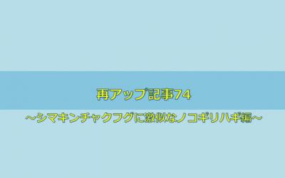 【シマキンチャクフグに激似なノコギリハギ編】再アップ記事74
