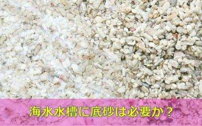 【必要な3つの理由】海水魚水槽に底砂は必要か?